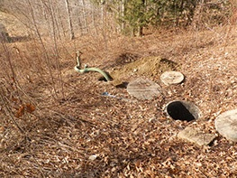 Sewer area in wooded yard